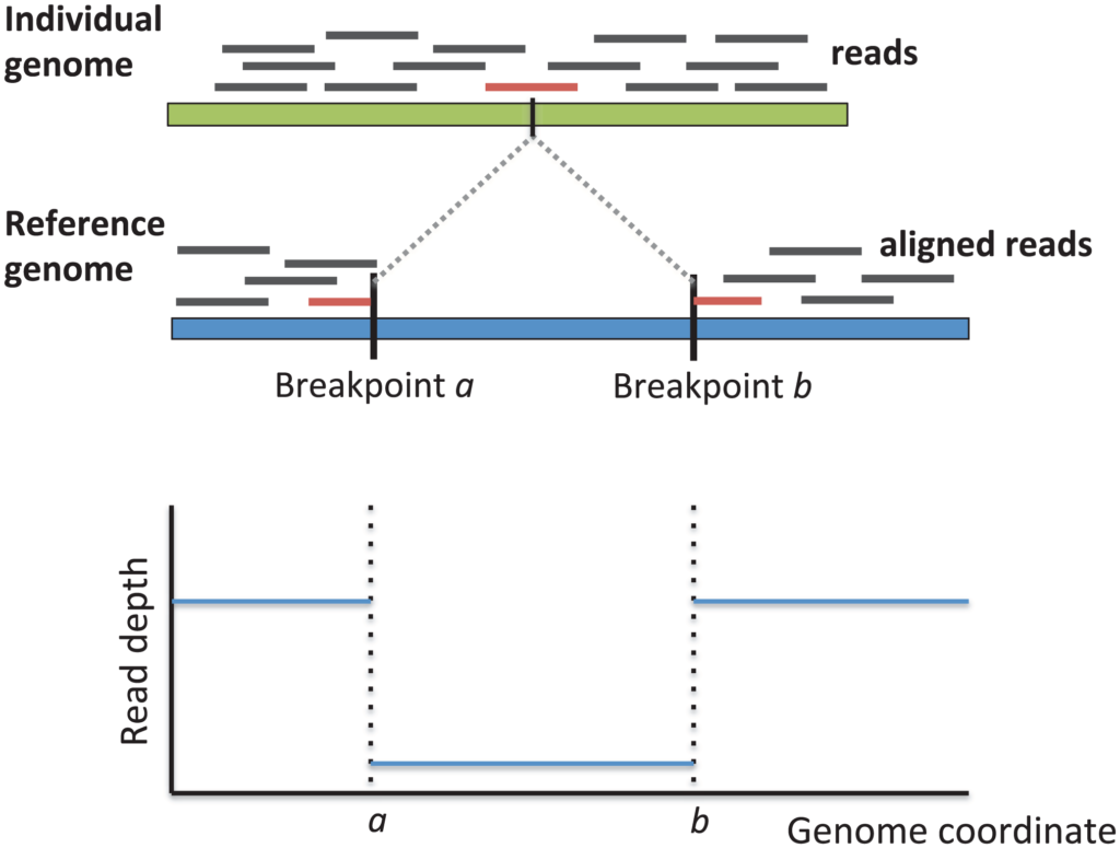 The breakpoints of a structural variant